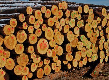 Nowy system sprzedaży drewna poniósł klęskę