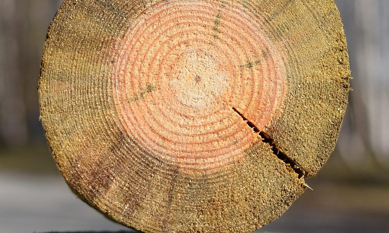 Prewencyjna ochrona drewna będącego wkontakcie zpodłożem