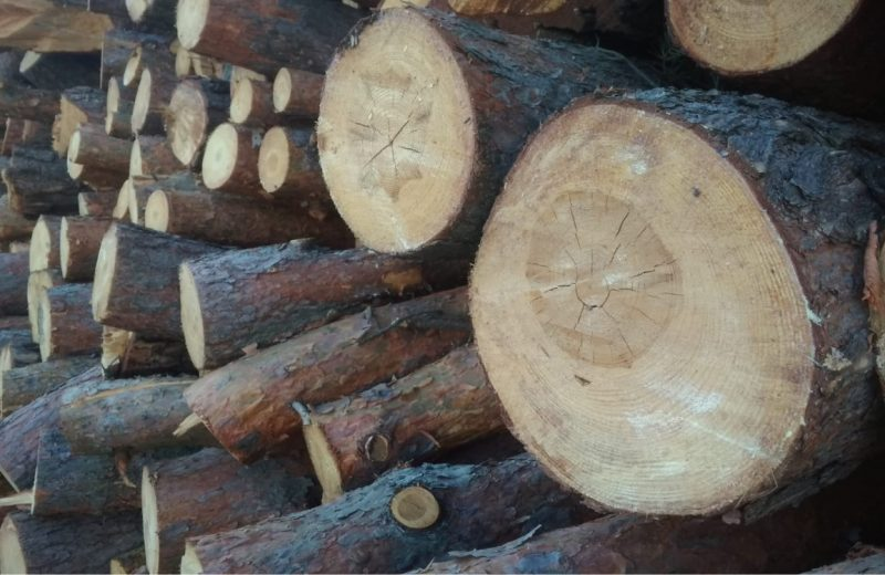 Uwagi branżowych stowarzyszeń do założeń nowych zasad sprzedaży drewna