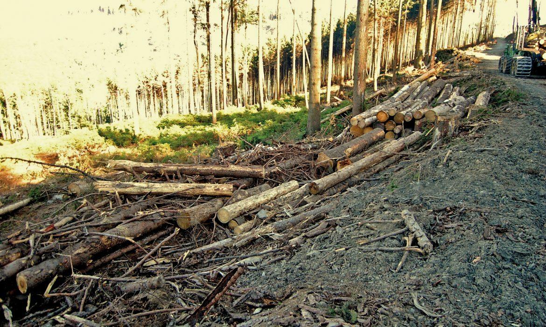 Jak kosztowne są ograniczenia wpozyskaniu drewna?