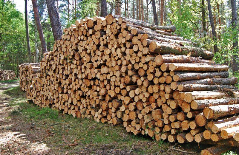 Trwale związani… niekorzystnymi zasadami sprzedaży drewna