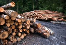 Budynki odpowiadają za niemal połowę zużycia energii. Czy drewno pomoże je ograniczyć?