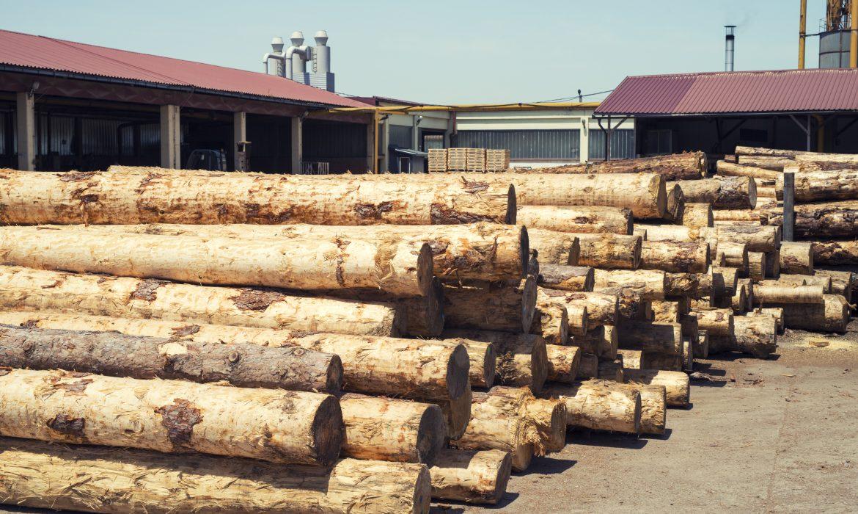 Certyfikacja FSC potrzebna firmom drzewnym