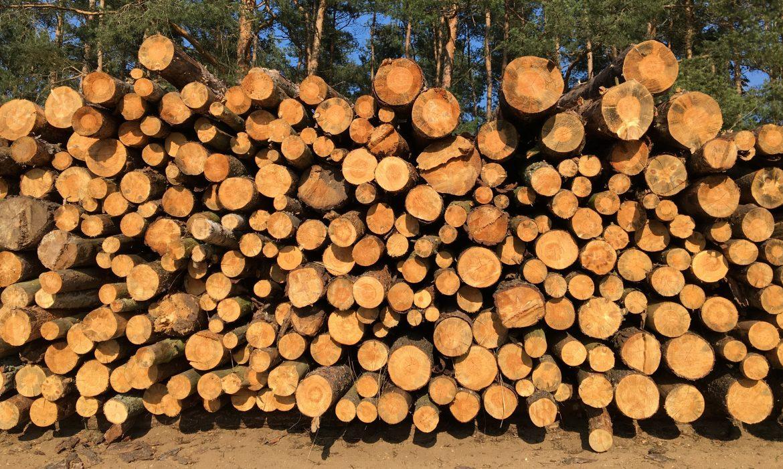 Polski nie stać na niekontrolowany eksport surowca drzewnego